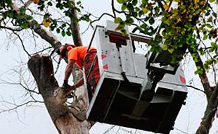 Bild zu Baumdienst Hannover Gartenservice Richter in Hannover