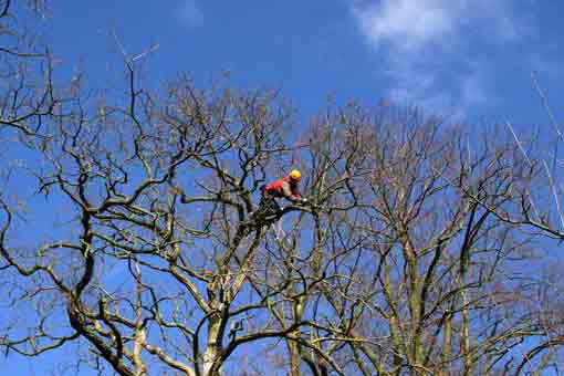 Bild 1 Hanseatic Treework Olav Johswich u. Stefan Schwarz GbR in Bremen