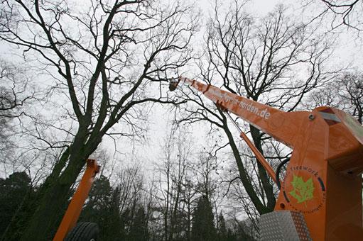 Bild 2 Hanseatic Treework Olav Johswich u. Stefan Schwarz GbR in Bremen