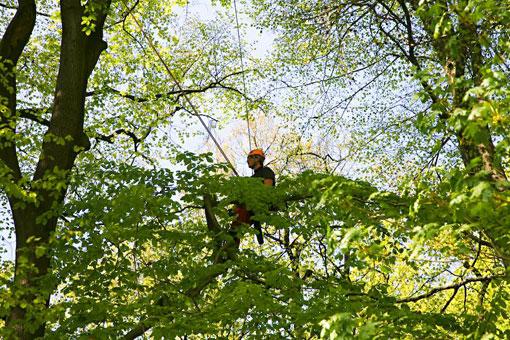 Bild 4 Hanseatic Treework Olav Johswich u. Stefan Schwarz GbR in Bremen