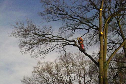 Bild 5 Hanseatic Treework Olav Johswich u. Stefan Schwarz GbR in Bremen
