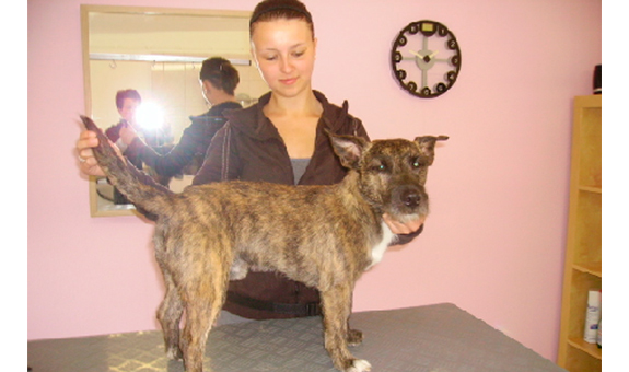 Bild 2 Bines Hundestyling in Giesen