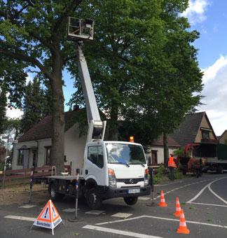 Bild 1 Baumpflege Weserland in Bremen