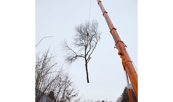 Bild 5 Pro Baum GmbH in Göttingen