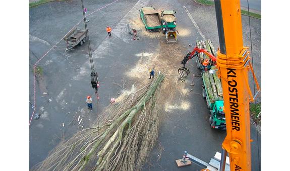Bild 6 Pro Baum GmbH in Göttingen