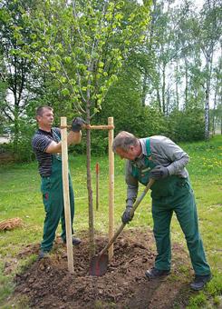 Bild 2 Baumpflege Gregor in Irxleben