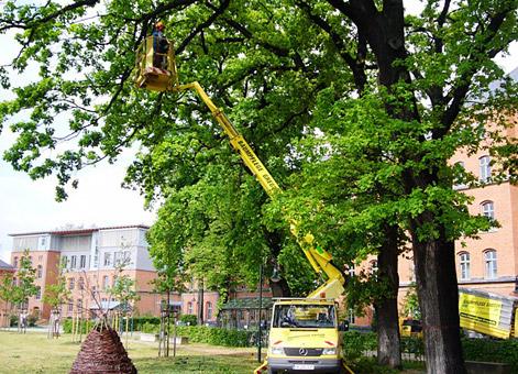 Bild 3 Baumpflege Gregor in Irxleben