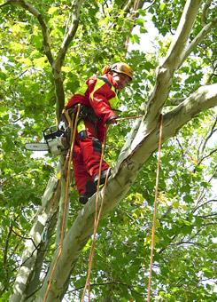 Bild 4 Baumpflege Gregor in Irxleben