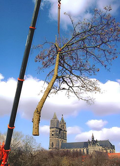 Bild 5 Baumpflege Gregor in Irxleben