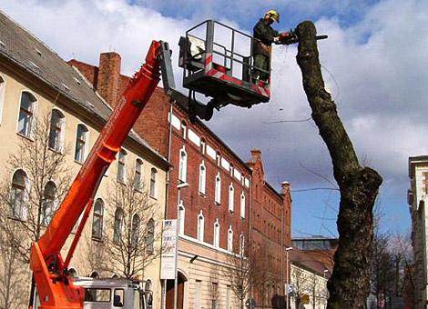 Bild 6 Baumpflege Gregor in Irxleben