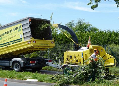 Bild 7 Baumpflege Gregor in Irxleben
