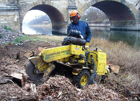 Bild 8 Baumpflege Gregor in Irxleben