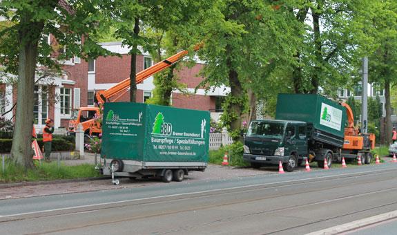 Bild 4 BBD Bremer Baumdienst in Bremen