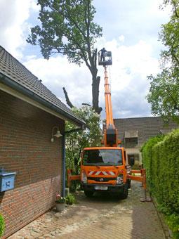 Bild 5 BBD Bremer Baumdienst in Bremen