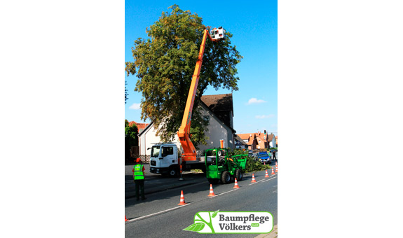 Bild 1 Baumpflege Völkers GmbH in Neustadt