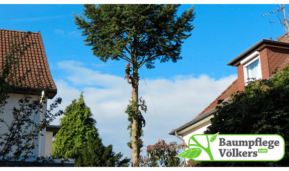 Bild 2 Baumpflege Völkers GmbH in Neustadt