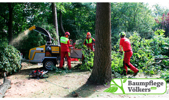 Bild 8 Baumpflege Völkers GmbH in Neustadt