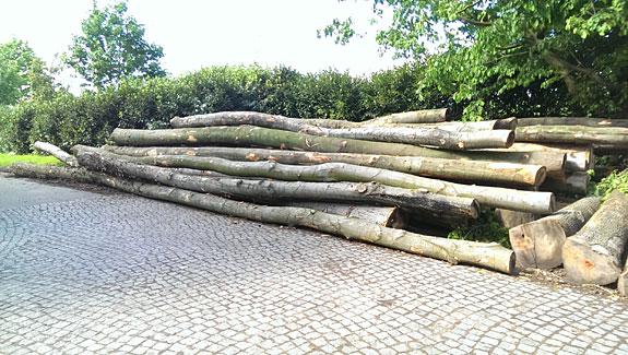 Bild 5 Meyer Kaminholz Stammholz in Bad Oeynhausen