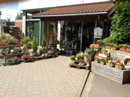 Bild 3 Hinz Pflanzen- u. Floristikmarkt in Magdeburg