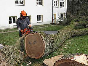 Bild 8 Baumpflege Bremermann in Bremen