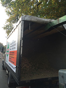 Bild 10 Baumpflege Bremermann in Bremen
