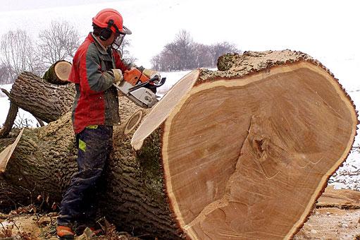 Bild 4 Baumpflege Bremermann in Bremen