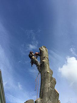 Bild 4 Baumpflege Weserland in Bremen