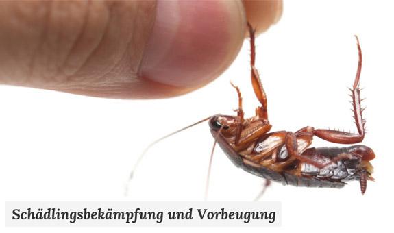 Bild 1 Enviro Pest Control GmbH in Braunschweig