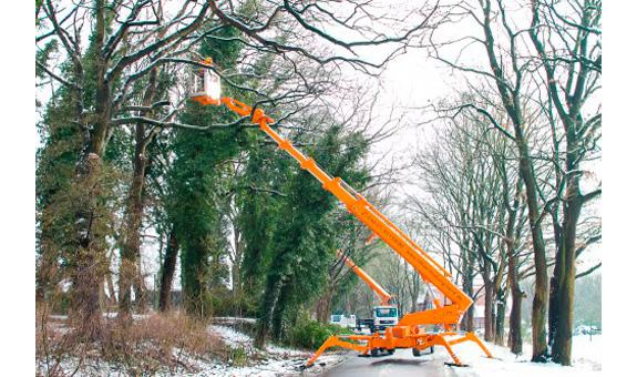Bild 2 BBD Bremer Baumdienst in Bremen
