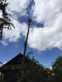Halle's Gartenprofis Tom Knorscheidt