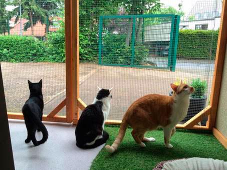 Katzenpension Tiergarten Leipzig